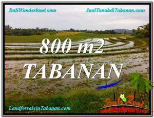 TANAH di TABANAN BALI DIJUAL 800 m2 di Tabanan Selemadeg