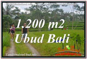 DIJUAL TANAH di UBUD BALI 12 Are di Ubud Tegalalang