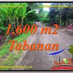 TANAH MURAH DIJUAL di TABANAN Untuk INVESTASI TJTB337