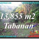 INVESTASI PROPERTI, TANAH DIJUAL di TABANAN BALI TJTB335