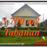 INVESTASI PROPERTI, DIJUAL MURAH TANAH di TABANAN BALI TJTB336