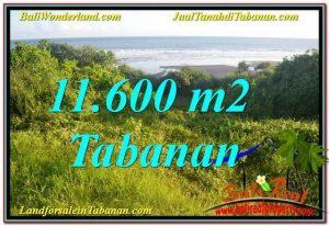 JUAL TANAH MURAH di TABANAN BALI 11,600 m2  View Laut, Gunung dan sawah