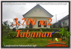 TANAH di TABANAN DIJUAL MURAH 3,700 m2 di Tabanan Penebel
