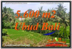 JUAL TANAH MURAH di UBUD BALI 56 Are di Sentral / Ubud Center