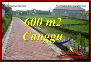 JUAL TANAH MURAH di CANGGU BALI 600 m2 View sawah, lingkungan villa