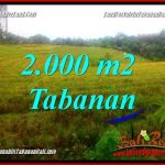 TANAH di TABANAN BALI DIJUAL MURAH 2,000 m2 di Tabanan Selemadeg