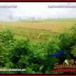 DIJUAL MURAH TANAH di TABANAN BALI TJTB357