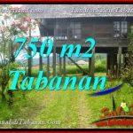 JUAL MURAH TANAH di TABANAN BALI 750 m2 view Kebun dan Gunung