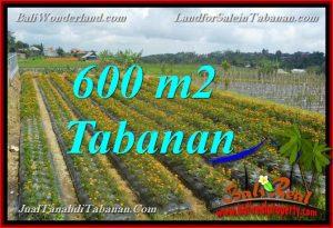 JUAL MURAH TANAH di TABANAN BALI 600 m2 view kebun dan Gunung