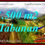 JUAL TANAH DI TABANAN BALI 1,500 m2 di Tabanan Bedugul