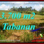 JUAL TANAH DI TABANAN BALI 3,700 m2 View Sawah dan Sungai
