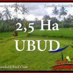 DIJUAL TANAH di UBUD Untuk INVESTASI TJUB655