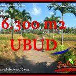 JUAL TANAH di UBUD BALI 63 Are View Tebing link Villa