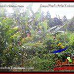 TANAH DIJUAL di TABANAN 15 Are di Tabanan Selemadeg