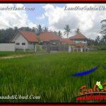 TANAH MURAH DIJUAL di UBUD BALI 1,100 m2 di Ubud Pejeng