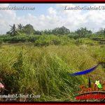 TANAH di UBUD DIJUAL MURAH 400 m2 di Ubud Gianyar
