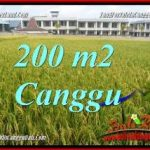 TANAH MURAH di CANGGU BALI DIJUAL 200 m2 di CANGGU BRAWA