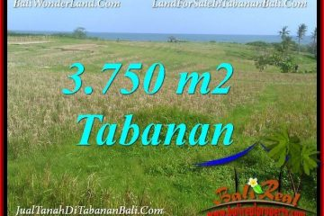 TANAH di TABANAN BALI DIJUAL MURAH 3,750 m2 di TABANAN SELEMADEG