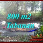 TANAH di TABANAN BALI DIJUAL MURAH 800 m2 VIEW KEBUN DAN SUNGAI