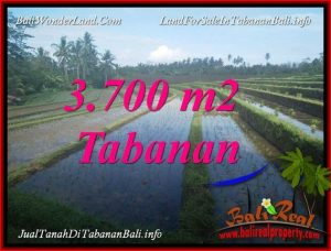 TANAH MURAH di TABANAN BALI 37 Are di TABANAN SELEMADEG