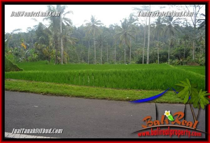 JUAL Tanah di Ubud Bali 10,000 m2 di Ubud Tegalalang