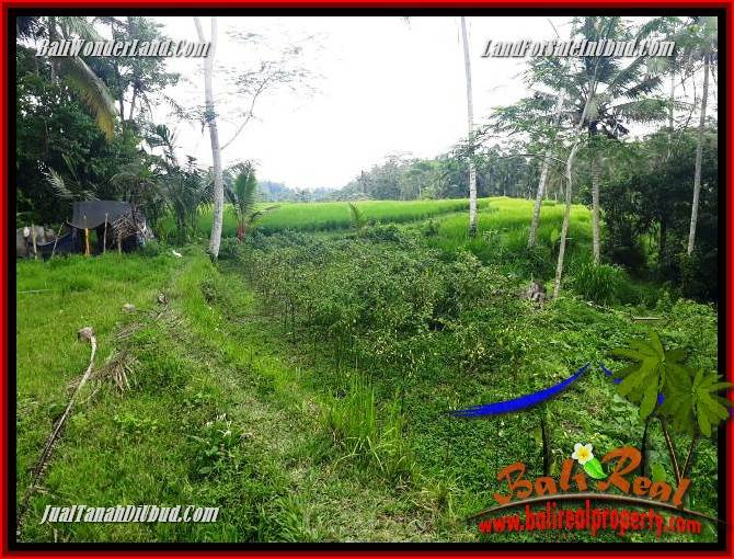 JUAL Tanah di Ubud Untuk Investasi TJUB696