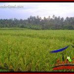 JUAL Tanah Murah di Tabanan 3,950 m2 di Tabanan Selemadeg