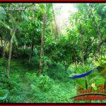JUAL Murah Tanah di Tabanan 184.5 Are View Laut dan Kebun