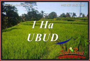 Tanah Dijual di Ubud 100 Are di Ubud Tegalalang