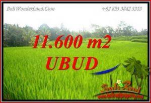 Dijual Murah Tanah di Ubud 116 Are di Ubud Tegalalang
