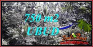 Dijual Tanah Murah di Ubud Bali 8 Are di Ubud Tampak Siring