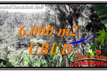 TANAH MURAH di UBUD JUAL 6,000 m2 View Sawah tebing dan Sungai