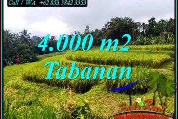 JUAL TANAH DI TABANAN 4,000 m2 VIEW SAWAH DAN SUNGAI