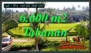 JUAL MURAH TANAH di TABANAN BALI 6,600 m2 VIEW SAWAH DAN SUNGAI