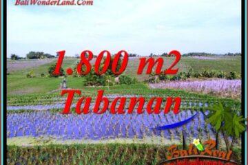 INVESTASI PROPERTI, TANAH MURAH DIJUAL di TABANAN TJTB491
