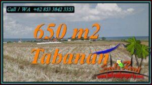 TANAH di TABANAN DIJUAL 650 m2 di SELEMADEG TABANAN